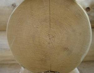 drevesina eli 300x232 Ель