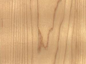 drevesina klen 300x225 Клен